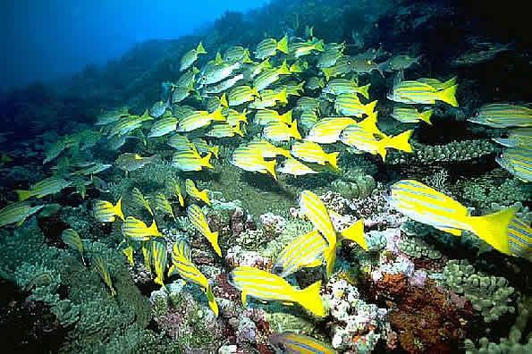 I fondali subacquei alle Maldive
